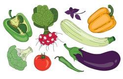 Do verde fresco da mola dos vegetais e das ervas coleção orgânica do vetor Fotografia de Stock