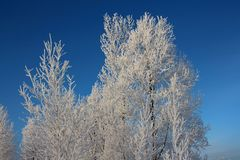 Do vidoeiro coberto de neve da geada da neve das estradas das árvores da neve da floresta de Sibéria do inverno do russo trilhas  ilustração stock