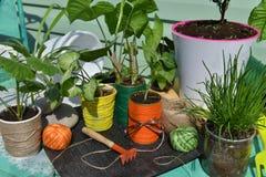 Do vintage vida ainda com as plantas home bonitos Fotografia de Stock