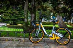 Do wynajęcia jawny rower parkujący na deszczowym dniu zdjęcia royalty free