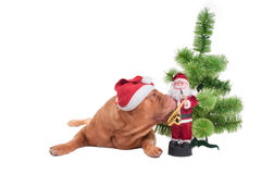 Do you know when the Santa is coming? Royalty Free Stock Images