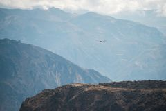 Do you see the condor. Peruvian Andes landscape with flying condor royalty free stock photos