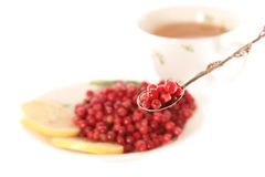 Do you want soaked cowberries. Soaked cowberries with lemonl or don't have day's illness isolated Stock Image