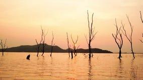 Do zumbido silhueta do lapso de tempo para fora da árvore seca na água no reservatório no por do sol, distrito de Phra do golpe d vídeos de arquivo