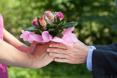 Doação do homem flores fotografia de stock