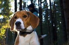 Dob i sommarskogen med tillbaka ljus Fotografering för Bildbyråer