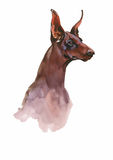 Doberman Animal dog watercolor illustration isolated on white background vector Royalty Free Stock Photo
