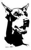 Doberman. Black doberman head with white background Royalty Free Stock Image
