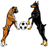 Doberman and boxer. Dogs with soccer ball, illustration isolated on white background stock illustration