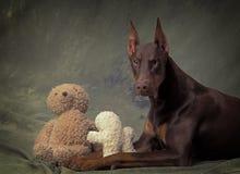 Doberman com brinquedos peluches Imagens de Stock Royalty Free