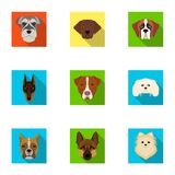 Doberman, Dalmatian, Dachshund, Spitz, Stafford and other breeds of dogs.Muzzle of the breed of dogs set collection. Icons in flat style vector symbol stock Royalty Free Stock Photography