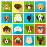 Doberman, Dalmatian, Dachshund, Spitz, Stafford and other breeds of dogs.Muzzle of the breed of dogs set collection Royalty Free Stock Images