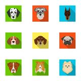 Doberman, Dalmatian, Dachshund, Spitz, Stafford and other breeds of dogs.Muzzle of the breed of dogs set collection Stock Image