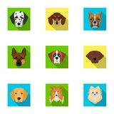Doberman, Dalmatian, Dachshund, Spitz, Stafford and other breeds of dogs.Muzzle of the breed of dogs set collection. Icons in flat style vector symbol stock Stock Photo