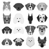 Doberman, Dalmatian, Dachshund, Spitz, Stafford and other breeds of dogs.Muzzle of the breed of dogs set collection Stock Photo