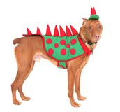 Doberman dinosaur Royalty Free Stock Photos