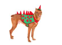 Doberman dinosaur Stock Photography