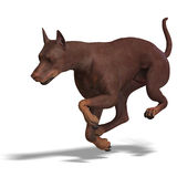 Doberman Dog. 3D rendering with clipping path and Royalty Free Stock Images