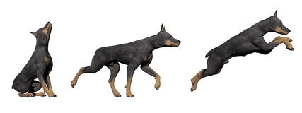 Doberman dog - 3D render Royalty Free Stock Image