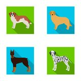 Doberman,dog, domestic, and other web icon in flat style.Beagle, retriever, dolmatian, icons in set collection. Royalty Free Stock Photos