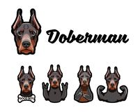 Doberman with gestures. Middle finger, Bone, Muscules, Rock. Vector illustration. Doberman with gestures. Middle finger, Bone, Muscules, Rock gesture, Horns Royalty Free Stock Images