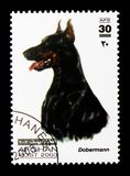 Doberman Pinscher (Canis lupus familiaris), Dogs serie, circa 2003. MOSCOW, RUSSIA - DECEMBER 21, 2017: A stamp printed in Afghanistan shows Doberman Pinscher ( royalty free stock photography