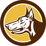 Doberman Pinscher Head Circle Retro Stock Photography
