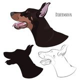 Doberman Pinscher head  on white background. Silhouette,. Dobermann panting with tongue out. Watchdog profile for your design Stock Photo