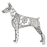 Doberman pinscher zentangle stylized, vector, illustration, free. Hand pencil, hand drawn, pattern. Zen art. Ornate vector. Lace. Dog chinese zodiac sign. Print Royalty Free Stock Image