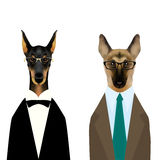 Doberman in tuxedo and glasses, german shepherd dog in suit and glasses Royalty Free Stock Photos