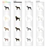 Dobermann, caniche de chien, boxeur, pitbull de race Les races de chien ont placé des icônes de collection dans le style monochro illustration stock