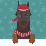 Dobermann dans le chapeau de Noël Photographie stock libre de droits