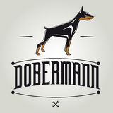 Dobermann dog vector illustration Royalty Free Stock Photos
