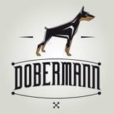 Dobermann dog vector illustration. Vector illustration of a dobermann Royalty Free Stock Photos