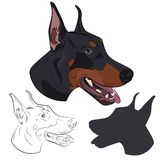 Doberman Pinscher face isolated on white background. Silhouette,. Dobermann panting with tongue out. Watchdog portrait for your design Stock Photography