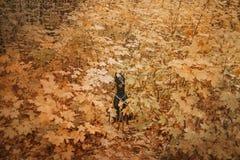 Dobermannhund im Herbst im Wald lizenzfreie stockbilder