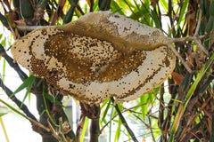 Dobladillo de bambú de la colmena de la abeja Fotografía de archivo