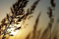 Doblado y puesta del sol Foto de archivo libre de regalías