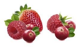 Doble de la fresa del arándano de la frambuesa aislado en blanco Fotos de archivo libres de regalías