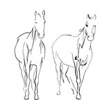 Doble horse sketch. Two horses sketch, drawn ink illustration Stock Photos
