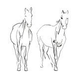 Doble horse sketch. Two horses sketch, drawn ink illustration stock illustration