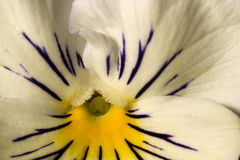 Dobleces y detalles delicados Fotografía de archivo libre de regalías