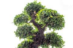 Dobra das árvores Imagens de Stock Royalty Free