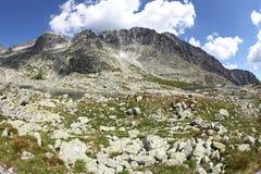 5 dobras de Spisskych - tarns em Tatras alto, Eslováquia Imagens de Stock
