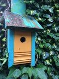 Dobre a textura azul do verde da hera da pintura da casca alaranjada da casa do pássaro Fotografia de Stock