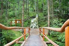 Dobrocska冷杉在一个森林露天博物馆在Vydrovo 库存图片