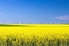 Dobrogea e suas flores, paisagem Imagem de Stock