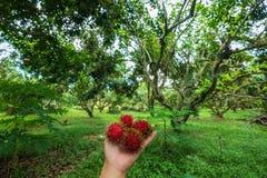 Dobry czas w Organicznie bliźniarki gospodarstwie rolnym w rayong Zdjęcia Royalty Free
