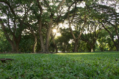 Dobry dzień w parku Obrazy Royalty Free