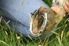 dobry koński szczęścia buta symbol Zdjęcie Stock